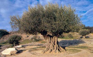 Mostra L'albero della conoscenza matematica Pennabilli