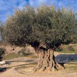 """Mostra """"L'albero della conoscenza matematica"""""""